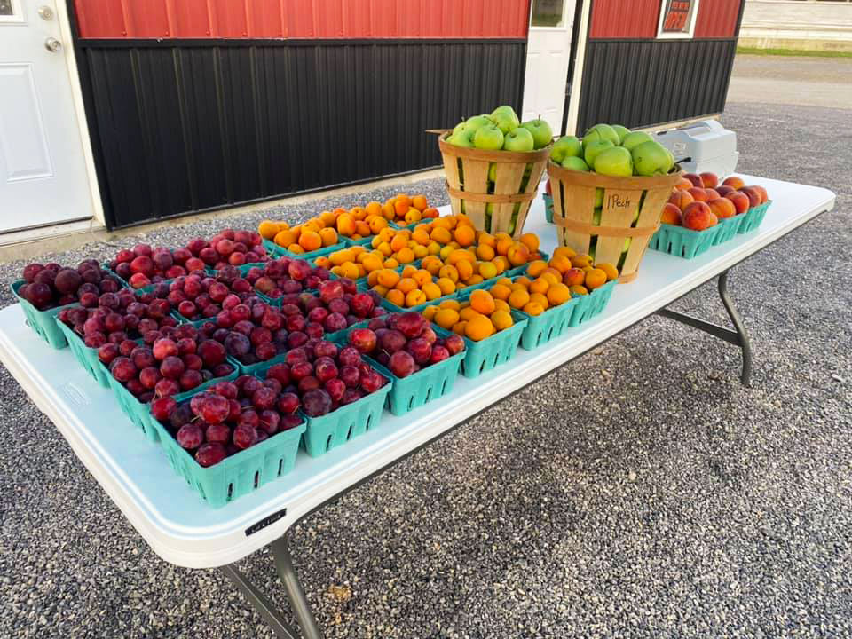 fresh fruit apple orchard central pennsylvania apple picking 2