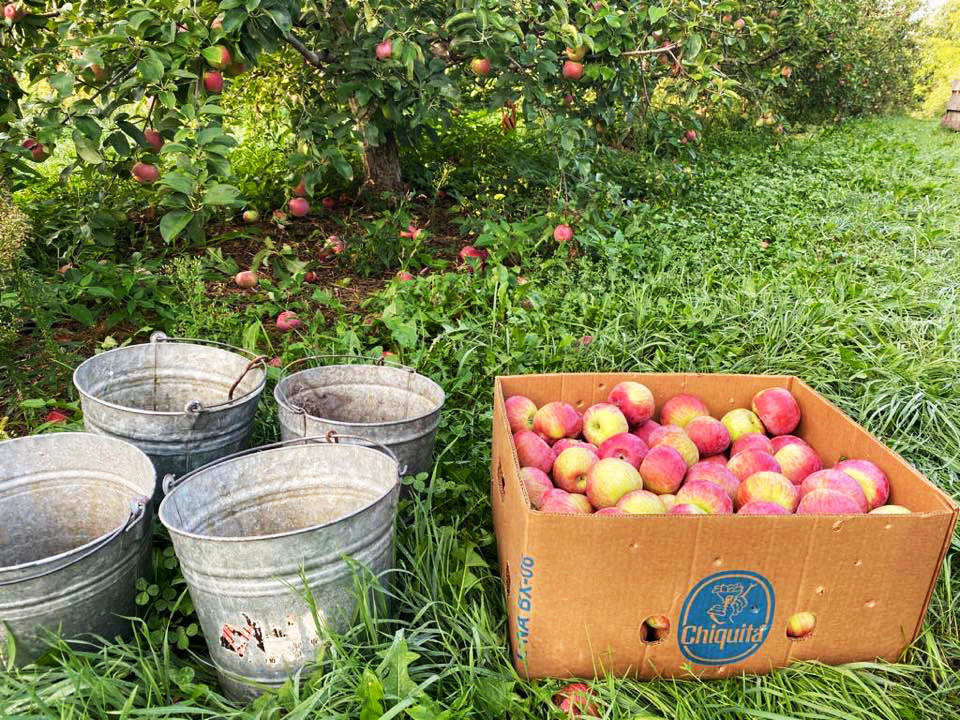 northhill apple orchard email list signup