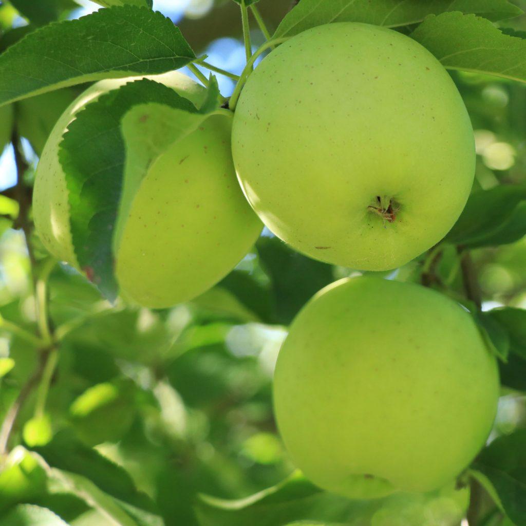 pa apple orchard sunbury pa