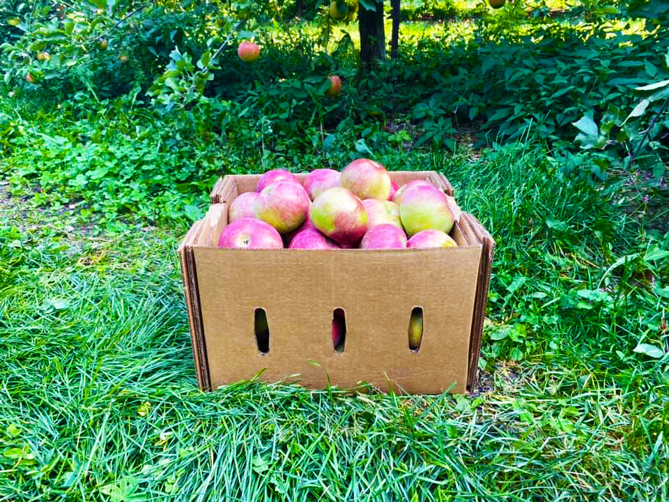 apple picking near winfield pa at northhill orchard